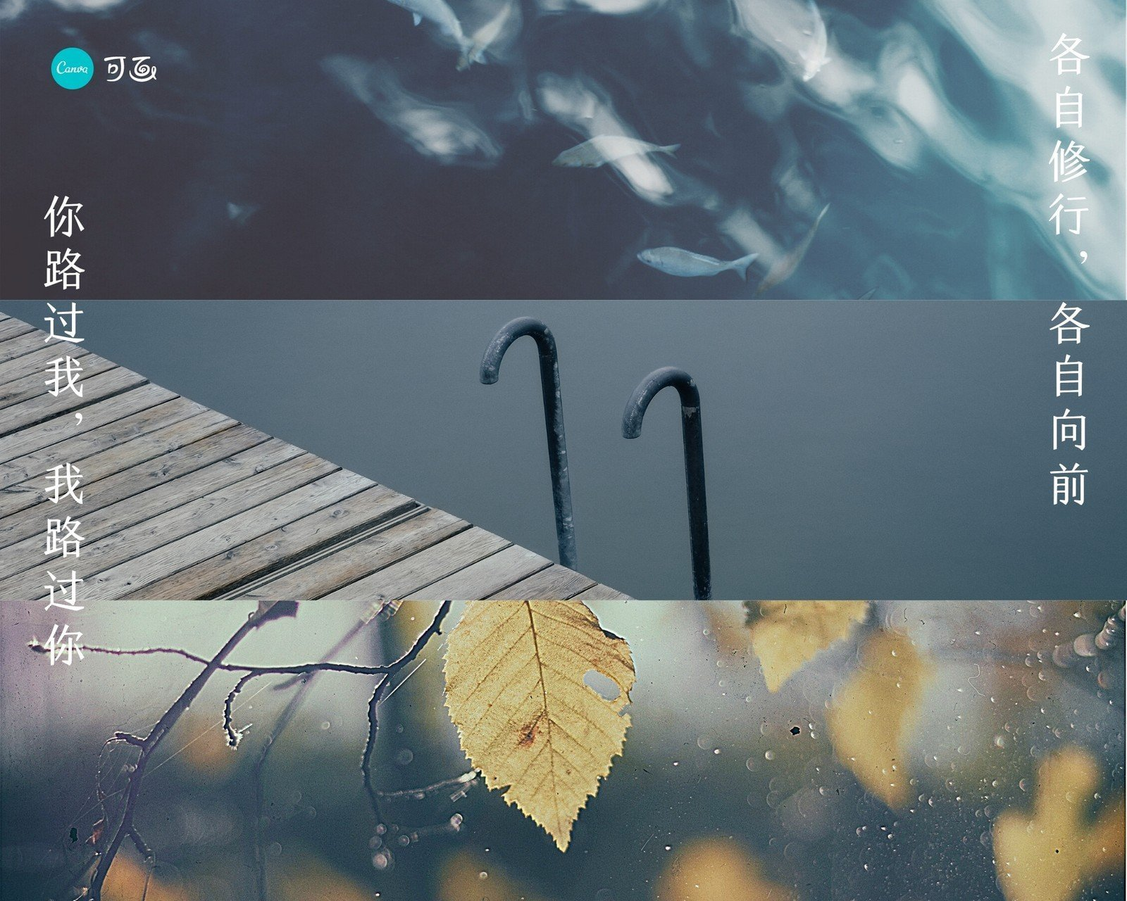 蓝色海水、叶子、风景照片分享拼图