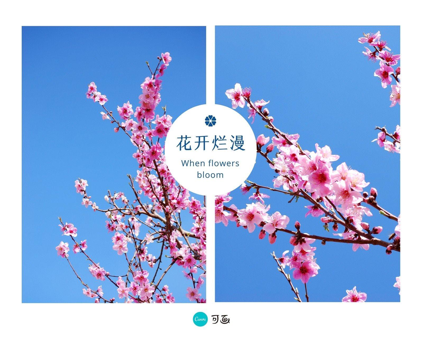 蓝天鲜花风景拼图